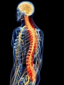 43182918 - medically accurate illustration - painful spine